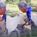 Man Almost Has His Arm Ripped Off By A Caged Lion In South Africa [Photos/Video] 28