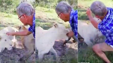 Man Almost Has His Arm Ripped Off By A Caged Lion In South Africa [Photos/Video] 1