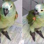 Parrot Arrested In Brazil For Alerting Drug Dealers Police Were Coming 28