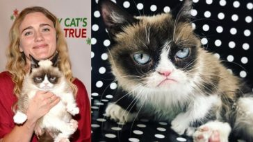 Grumpy Cat, The World's Richest Cat With $100 Million Fortune Dies At Age Of 7 5
