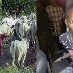 Herdsman Beheads Girlfriend In Ekiti 'For Failing To Honour Betrothal Agreement' [Photos] 27