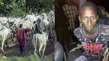 Herdsman Beheads Girlfriend In Ekiti 'For Failing To Honour Betrothal Agreement' [Photos] 5