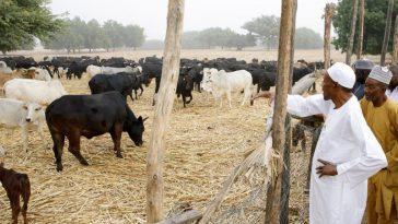 Buhari Approves Establishment Of Ruga Settlement For Herdsmen In 36 States Of Nigeria 3