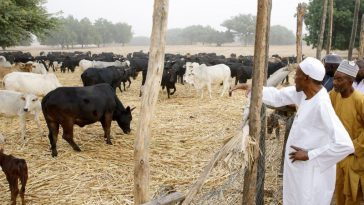 Despite Outrage Among Nigerians, FG Begins Establishment Of Ruga Settlements In 11 States 2