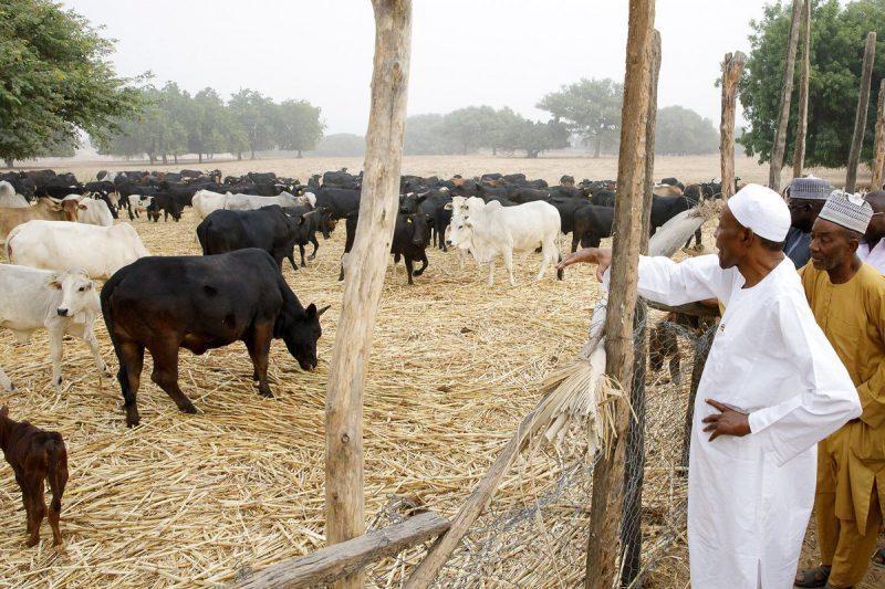 Despite Outrage Among Nigerians, FG Begins Establishment Of Ruga Settlements In 11 States 1