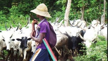 South-East Governors, Three Others Reject Buhari's Ruga Settlements For Herdsmen 8