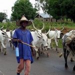 """""""Return To North Now"""" - Northern Leaders Orders Fulani Herdsmen To Vacate Southern Nigeria 28"""