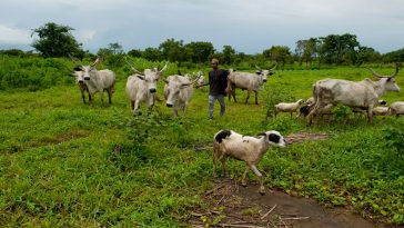 Abia Govt Restricts Sale Of Land To Prevent Ruga's Policy From Sneaking In Through Backdoors 7