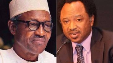 """A Spade Is Called A Spade, Not A Spoon"" - Shehu Sani Attacks Buhari's Government Over Shiites Crisis 10"