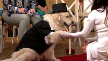 After Dating 221 Men And 4 Failed Engagements, Woman Marries Dog Live On TV [Photos] 5