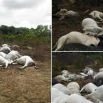 Mysterious Thunder Strike, Kills Over 36 Fulani Herdsmen Cows On Ondo Sacred Mountain 8