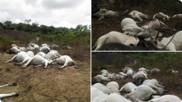 Mysterious Thunder Strike, Kills Over 36 Fulani Herdsmen Cows On Ondo Sacred Mountain 4