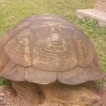 Historic 344-Year-Old Tortoise, Alagba Dies In Ogbomosho Palace [Photos] 27