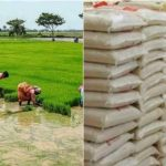 Price Of Rice In Nigeria To Crash To N9000 In 3 Weeks, As Rice Farmers Record A Bumper Harvest 28