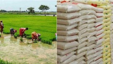 Price Of Rice In Nigeria To Crash To N9000 In 3 Weeks, As Rice Farmers Record A Bumper Harvest 15