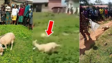 Woman Turns Into A Goat After Being Forced To Pick Money She Dropped On The Floor [Video] 12