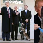 US President, Donald Trump Honours Military Dog 'Conan' Who Killed ISIS Leader [Video] 32