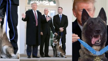 US President, Donald Trump Honours Military Dog 'Conan' Who Killed ISIS Leader [Video] 2