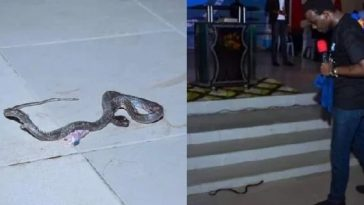 RCCG Pastor Claims He Was Attacked By A Snake At The Church Altar In Lagos [Photos] 4