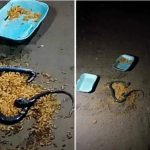Pandemonium As Cooked Meat A Man Bought For His Girlfriend Turns Into Snake In Delta [Video] 28