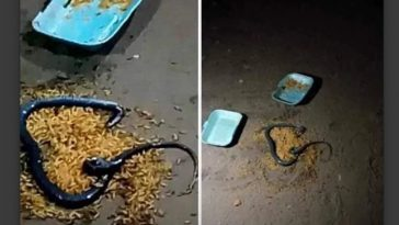 Pandemonium As Cooked Meat A Man Bought For His Girlfriend Turns Into Snake In Delta [Video] 2