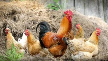 Man Beats Wife Mercilessly For Killing Christmas Chicken To Prepare Soup Before The D-day 6