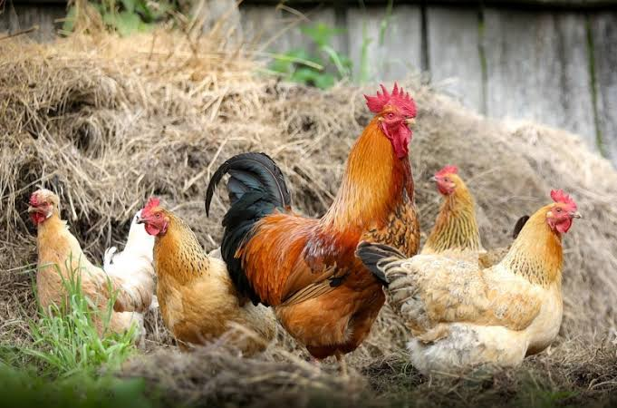 Man Beats Wife Mercilessly For Killing Christmas Chicken To Prepare Soup Before The D-day 1