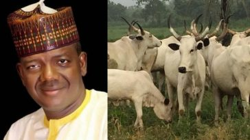 Zamfara Government Bans Selling Of Cow Without Receipts And Photos With Buyers 6
