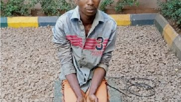 20-Year-Old Herdsman Who Raped 54-Year-Old Woman To Death, Begs For Forgiveness 1