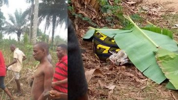 Police Arrests Young Man Who Beheaded An Old Woman For A Prophetess In Akwa Ibom [Photos] 6