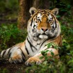 Tiger Tests Positive For Coronavirus At US Zoo, Becomes First Known Case In The World 28