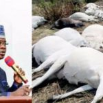 Kogi Government Bans Sale Of Beef For 48 Hours Over Mysterious Death Of 12 Cows During Grazing 28