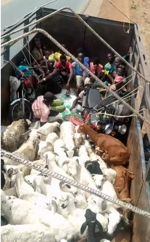 Security Officials Intercept Two Lorries Transporting Passengers Hidden Among Animals From Kano To Kaduna 1