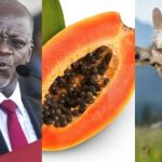 President Magufuli Reacts As Goat And Pawpaw Test Positive For Coronavirus In Tanzania 28