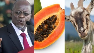 President Magufuli Reacts As Goat And Pawpaw Test Positive For Coronavirus In Tanzania 6