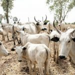 Imo Government Agrees To Pay Fulani Herdsmen N8 Million Over 55 Missing Cows 28
