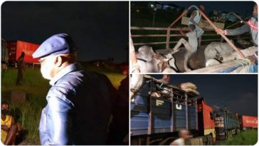 COVID-19: Governor Wike Arrests 14 Herdsmen From Adamawa, Says Their Cows Would Be Auctioned 9