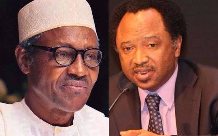 Buhari Cancelled His Presidential Broadcast Because Nigerians Planned To Stone Him – Shehu Sani 1
