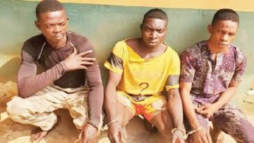 Police Arrests 3 Notorious Members Of 'One Million Boys' For Gang-Rαping A Lady In Ogun 7