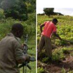 Bandits Demand N900k From Zamfara Farmers Before They Can Harvest Their Farm Produce 28