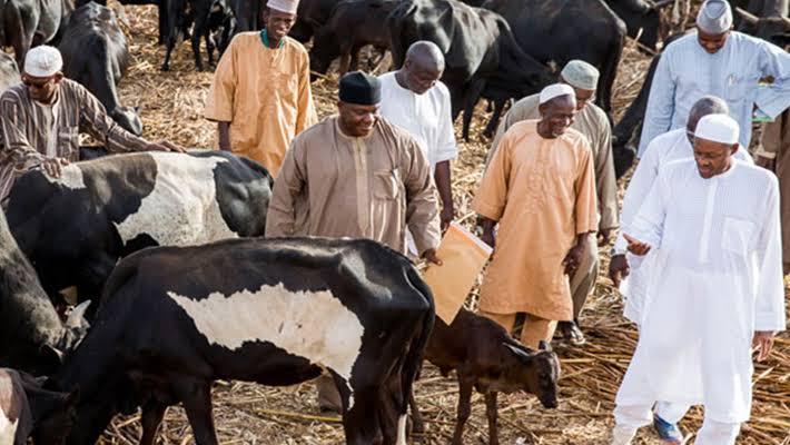 Buhari Visits His Cows In Daura After Refusing To Visit School Of Kidnapped Students In Kankara [Video] 1
