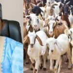 Yobe Government Empowers 890 Women With 1,780 Goats To Support Their Families 28