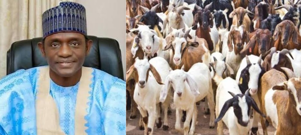 Yobe Government Empowers 890 Women With 1,780 Goats To Support Their Families 1