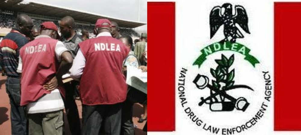 NDLEA Releases List Of Successful Recruited Applicants, Reveals How To Check 1