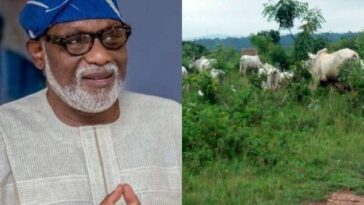 Insecurity: Governor Akeredolu Gives Herdsmen 7 Days Ultimatum To Vacate Ondo Forest 6