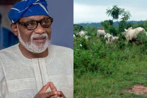 Insecurity: Governor Akeredolu Gives Herdsmen 7 Days Ultimatum To Vacate Ondo Forest 1