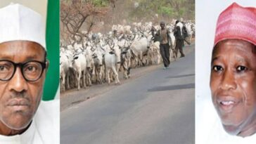 President Buhari Should Ban Movement Of Cows From North To South - Governor Ganduje 2