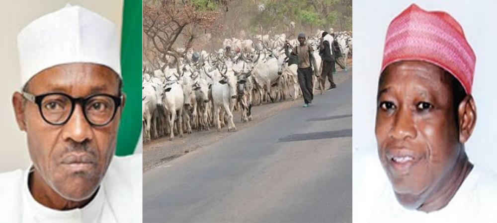 President Buhari Should Ban Movement Of Cows From North To South - Governor Ganduje 1