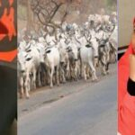 """""""Turn Into A Cow And See What Will Happen To You"""" — Nnamdi Kanu Replies Aisha Yesufu 28"""