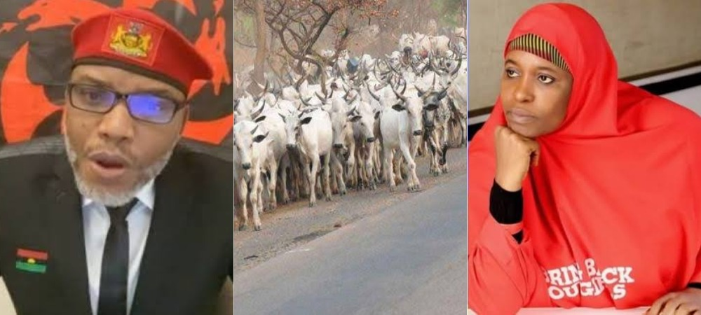 """Turn Into A Cow And See What Will Happen To You"" — Nnamdi Kanu Replies Aisha Yesufu 1"